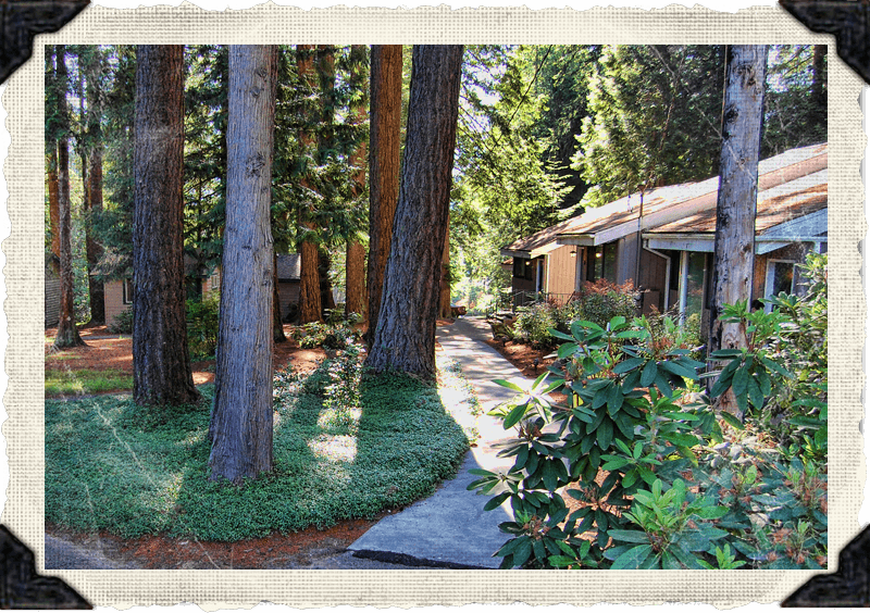 The Firs Grounds & Cabins