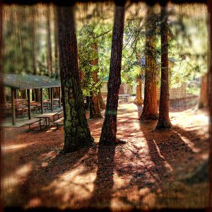 The Firs Picnic Area